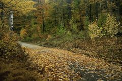 Vibrant fall colors light up New Hampshire`s backroads