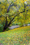 Fall Colors by the Creek. Yellow leaves on a tree and the ground in Ritter Park, near Fourpole creek, one of the United States top ten city parks located in Stock Photos