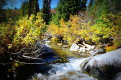 Fall colors by creek, Mt. Rainier National Park stock photo