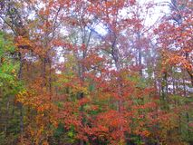 Fall colors in deep South Royalty Free Stock Photography