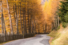 Fall colors in Dolomiten, Italy. Road with colorful  trees in Dolomiti Alps in autumn Royalty Free Stock Images