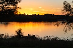 Migrating birds on the lake at dusk with fall colors. Fall colors at dusk with ripples on the lake. Colorful skyline. Golden sun reflections on the lake royalty free stock images