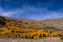 Fall Colors in the Eastern Sierra Royalty Free Stock Photography