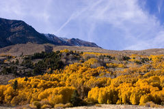 Fall Colors in the Eastern Sierra Royalty Free Stock Photos