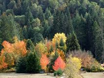 Colorful Forest in Wolf Creek Oregon stock photography