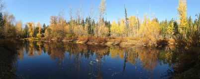 Fall colors. Around Moose Lake in Northern Idaho royalty free stock photography