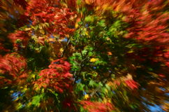 Fall Colors Stock Photography