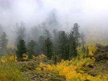 Fall colors and Fog. Fall colors, Sierra Nevada, CA, USA royalty free stock photo