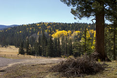 Fall Colors Forest Leaves Arizona Royalty Free Stock Photo