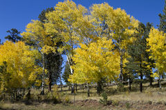 Fall Colors Forest Leaves Arizona Stock Photo