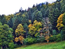 Fall colors in forests of Alpstein mountain range and Thur River valley. Canton St. Gallen, Switzerland stock photography