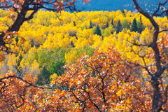 Fall Colors Framed Stock Image