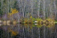 Fall colors in full display at lake Cowichan, Vancouver Island royalty free stock photo