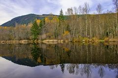 Fall colors in full display at lake Cowichan, Vancouver Island royalty free stock image