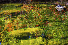 Fall Colors Green Water Reflection Abstract Wenatchee River Washington Stock Image