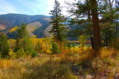 Fall colors in the high country Stock Photos