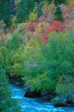 Fall colors in the high country. Changing of the leaves in the high country Royalty Free Stock Photography