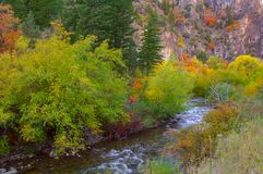Fall colors in the high country. Changing of the leaves in the high country Royalty Free Stock Images