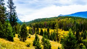Fall colors on a hiking trail in the Valley of Five Lakes Trail in Jasper National Park. In the Canadian Rockies royalty free stock photography