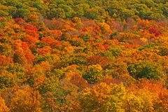 Fall colors on hillside Royalty Free Stock Image