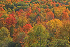 Fall colors on hillside upstate NY Royalty Free Stock Images