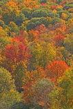 Fall colors on hillside upstate NY Royalty Free Stock Photography