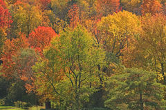 Fall colors on hillside upstate New York Royalty Free Stock Image