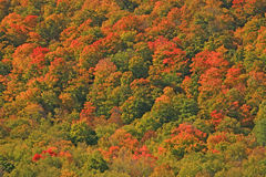 Fall colors on hillside Royalty Free Stock Photos