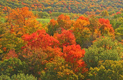 Fall colors on hillside. Upstate rural New York royalty free stock photos
