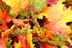 Fall colors home decorations - leaves Royalty Free Stock Photo