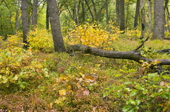 Fall Colors In Dunes State Park Stock Images