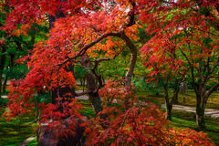Free Fall Colors In Japan Stock Photo - 63427510