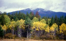 Fall Colors In The Mountains Royalty Free Stock Photo