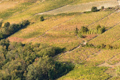 Fall colors in italian hill region called langhe Royalty Free Stock Photography