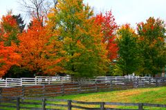Fall Colors IV Royalty Free Stock Photo