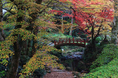 Fall colors in Japanese garden Stock Photos