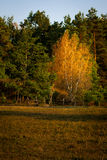Fall colors in July Stock Photography