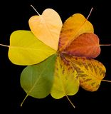 Fall Colors - Leaves. Pattern of autumn leaves isolated on black with clipping path Stock Photography