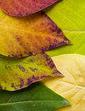 Fall Colors - Leaves. Patterns of autumn leaves of different colors Stock Image