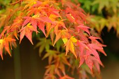 Fall Colors Leaves Closeup stock photo