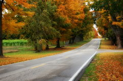 Fall Colors on Long Road Stock Photo