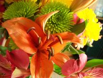 Fall colors in a lovely bouquet of various flowers. Fall colors abound in this closeup of a Fall bouquet. Orange lily, green and yellow chrysanthemum, red and stock images