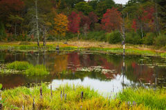 Fall colors in Maine Royalty Free Stock Photos