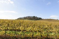 Fall Colors of Mid Willamette Valley Vineyards in Western Oregon Royalty Free Stock Photo