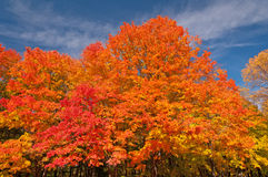 Fall Colors in the Midwest Royalty Free Stock Image