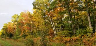 Fall colors in Minnesota royalty free stock photography