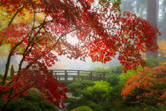Fall Colors by the Moon Bridge in Portland Japanese Garden in Oregon. Fall colors by the Moon Bridge in Portland Japanese Garden one foggy morning Oregon Stock Photography