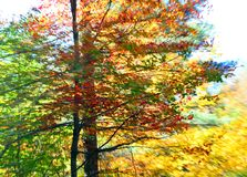 Fall Colors with motion blur Royalty Free Stock Photography