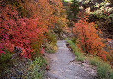Fall Colors on Mountain Trail. Trees and plants changing colors in the autumn season along a trail in Zion National Park, Utah Royalty Free Stock Photos