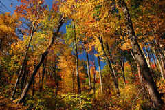 Fall colors in the mountains. Fall colors in the Blue Ridge mountains, taken at Shenandoah National Park royalty free stock image